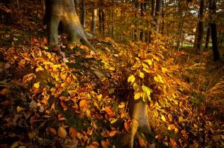 Las na Pogórzu jesienią