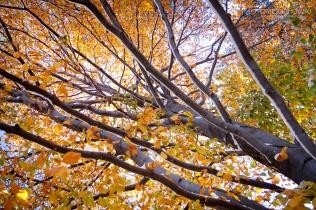 Zima i jesień